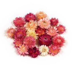 Száraztermés - Szalmarózsa, rózsaszín-natúr, 22 db