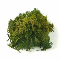 Száraztermés - Izlandi moha, sötétzöld, 25 g