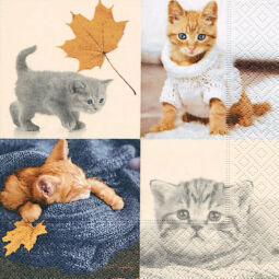 Szalvéta - Őszi macskák (k)