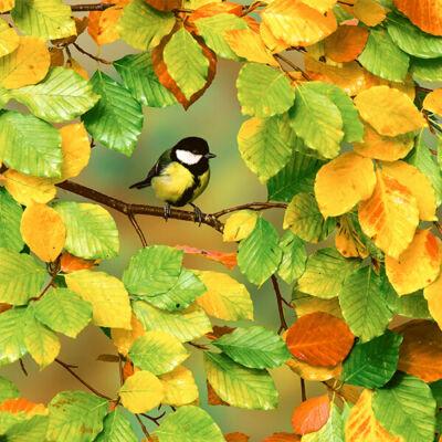 Szalvéta - Itt az ősz