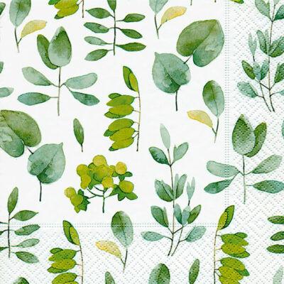 Szalvéta - Friss levelek (r)