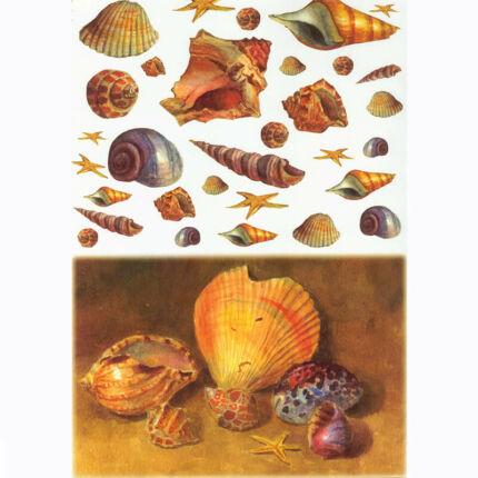 Rizspapír - kagylók